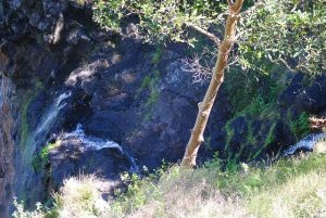 Mapleton Falls, QLD, Australia